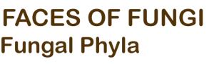 Faces Of Fungi Retina Logo